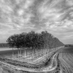 Poplars - Via Argine Po, Viadana, Mantova, Italy - March 31, 2012
