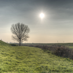 Lonely Tree - Crevalcore, Bologna, Italy - November 16, 2012