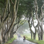 The Dark Hedges - Bregagh Rd, County Antrim, Northen Ireland, UK - August 16, 2017