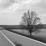 Lonely Tree - Strada Provinciale 57, Viadana, Mantova, Italy - March 24, 2015