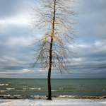 Tree - Lake Simcoe, Ontario, Canada - Winter 1987