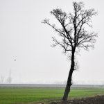 Naked Tree - Albareto, Modena, Italy - January 15, 2010