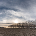 Poplars at Sunset - Marcaria, Mantova, Italy - March 2, 2019