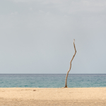 Solitary - Beach of Piscinas, Arbus, Sud Sardegna, Italy - August 13, 2020