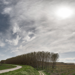 Poplars - Pomponesco, Mantova, Italy - April 8, 2018