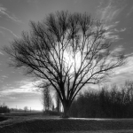 Tree at Sunset - Nonantola, Modena, Italy - December 21, 2011