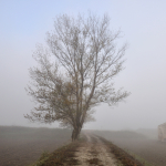 Foggy Morning - Sozzigalli, Soliera, Modena, Italy - November 18, 2011